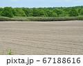 牧草畑 67188616
