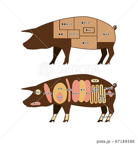 豚肉の部位 イラスト 67189386