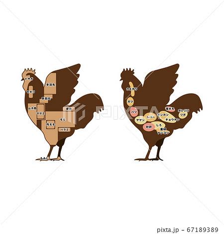 鶏肉の部位 正肉 ホルモン イラスト 67189389