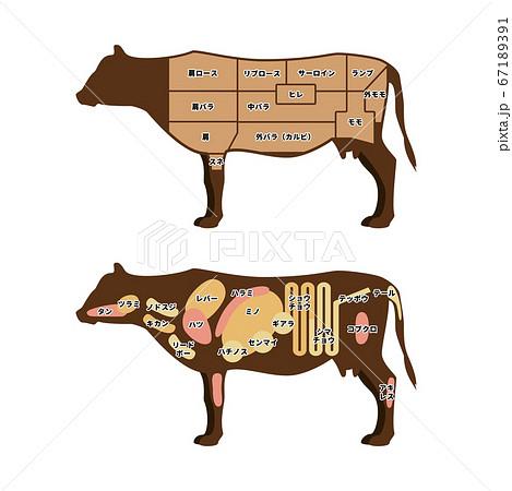 牛肉の部位 イラスト 67189391