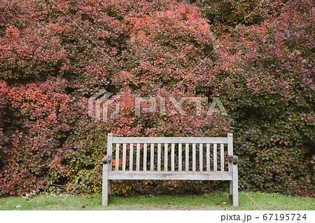 赤く染まったハグマノキの前のベンチ 67195724