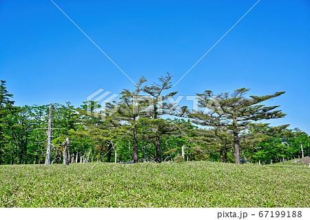 青空バックに見たトウヒの大木の情景@大台ヶ原山、奈良 67199188