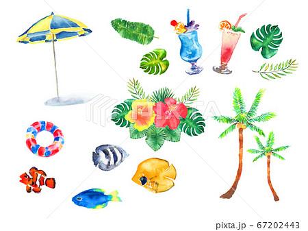 夏 南国 葉 手描き セット 水彩 イラスト 熱帯 ヤシの葉 バナナの葉 67202443