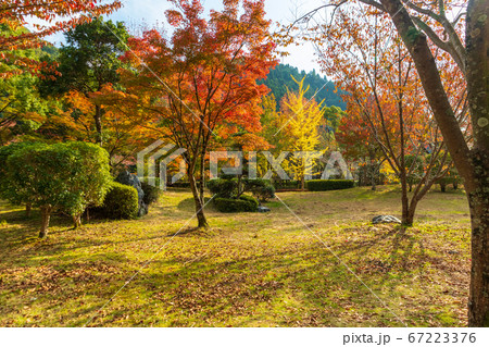 イチョウやもみじが色づいた秋の公園 67223376