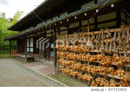 梅雨の谷間の古民家の軒下の玉ねぎとニンニク吊るし 都市農業公園 67232003