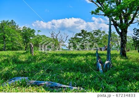 青空バックに新緑と倒木のコラボ情景@大台ヶ原山、奈良 67234833