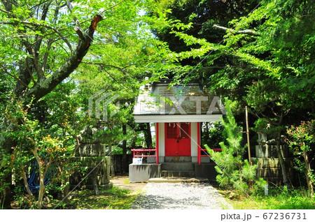 大磯町 愛宕神社社殿と境内の新緑 67236731