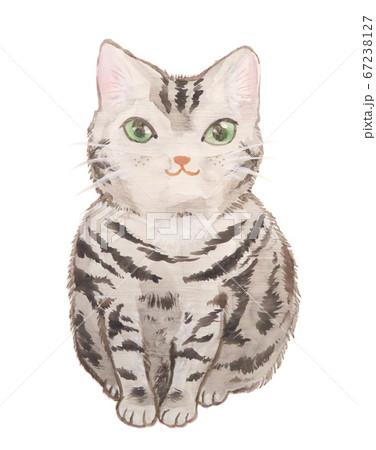 猫 67238127