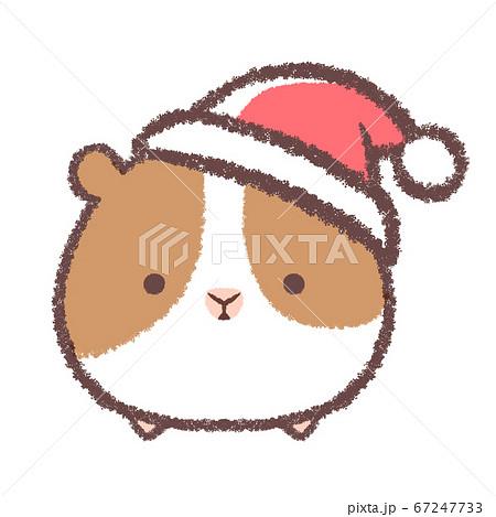 クリスマス帽子をかぶるモルモット 67247733