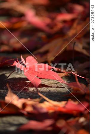 京都の寺の階段に舞った真っ赤な紅葉 67259443