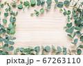 ユーカリ ナチュラルな植物の木目背景 67263110