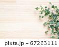 ユーカリ ナチュラルな植物の木目背景 67263111
