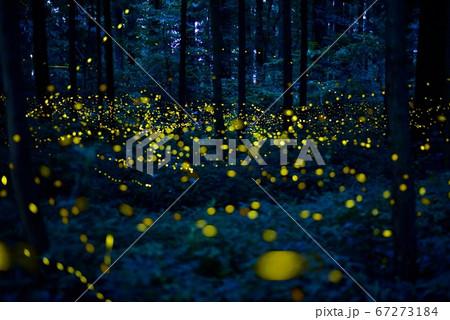 森の妖精たち 67273184