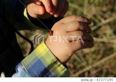 てんとう虫と子供の手(2歳児/男の子)/奈良県奈良市佐紀町 67277195