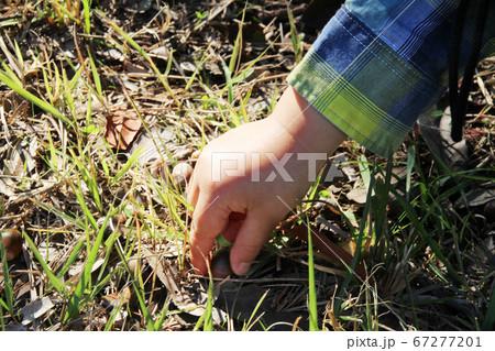 どんぐりを拾う子供の手(2歳児/男の子)/奈良県奈良市佐紀町 67277201