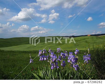 紫色の花を手前に見るオルチャ渓谷の奥には一軒のレンガ造りの建物 67286262
