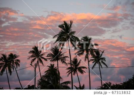 ヤシの木の夕方 ニューカレドニア 67313832