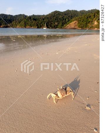 ミャンマーの島 南国ビーチとカニの風景写真 67326427
