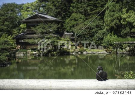 京都御苑内にある旧九条家庭園「拾翠亭」の初夏の風景と鳩 67332443