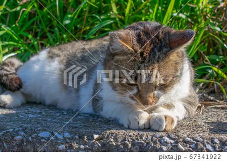 しょんぼりしているように見える野良猫 67341922