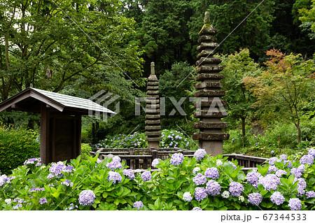 四国霊場81番札所 白峯寺の紫陽花 67344533