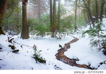 屋久島白谷雲水狭の絶景(1月)霧と積雪の屋久杉の森 67354260