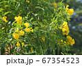 お花畑(Field of Flowers) 67354523