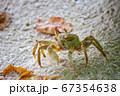 南国リゾートの砂浜にいる小さな物(カニ)が横歩きする姿 67354638