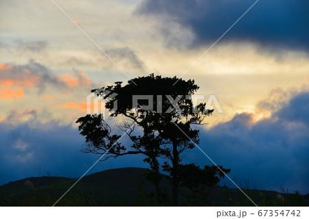 夕暮れの雲と木 67354742