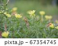 田舎道に咲く黄色い花 67354745