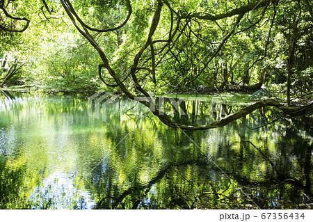 丸池様の水面に自然が映り込む、夏の風景 67356434