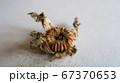 タチアオイの種 中身 67370653