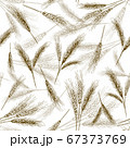 Seamless wheat ear pattern. Sketch breads grains, hand drawn bakery ears and bread grain vector illustration set 67373769