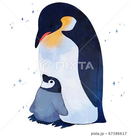 皇帝ペンギンの親子 67386617