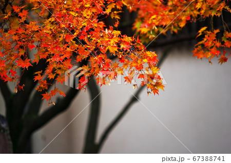 清澄庭園の片隅にひっそりと主張する秋の訪れ 67388741