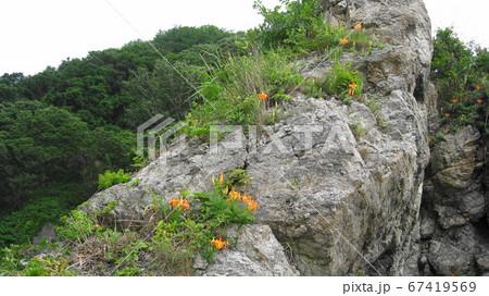奇岩に咲く岩百合の花カンゾウの花 67419569