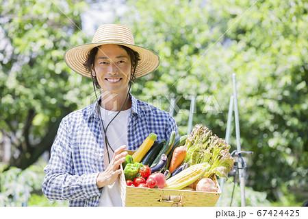 野菜を収穫する男性 67424425