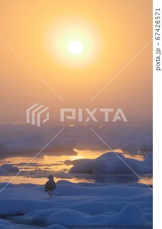 流氷が浮かぶオホーツク海に昇る朝日とカモメ 67426571