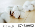 綿花 綿 コットン 67430952