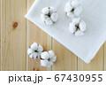 綿花 綿 コットン 67430955