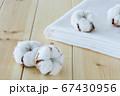 綿花 綿 コットン 67430956