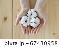 綿花 綿 コットン 67430958