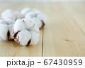 綿花 綿 コットン 67430959