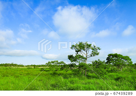 新緑の大草原 釧路湿原国立公園の温根内木道 67439289