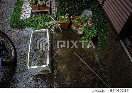 大雨の時の庭 発泡スチロールにたまった雨水 67440257