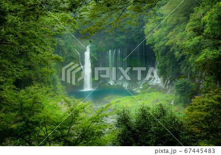 ジャングルの奥に佇むオアシス白糸の滝 67445483