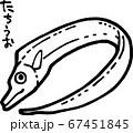 太刀魚の線画イラスト 67451845