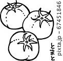 トマトの線画イラスト 67451846
