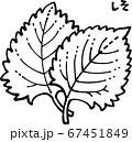 紫蘇の線画イラスト 67451849