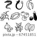 夏が旬の食べ物の線画イラスト 67451851